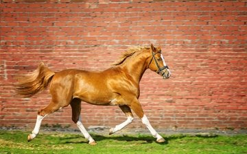 лошадь, трава, стена, кирпич, конь, бег