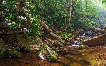 деревья, природа, лес, панорама, водопад, речка
