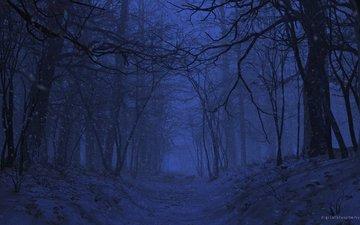 ночь, природа, лес, рендеринг, 3д