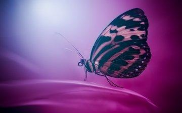 цветы, насекомое, фон, бабочка, крылья