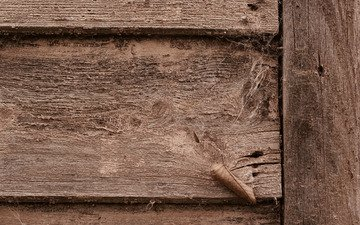 грязь, земля, дерево, паутина, двери, дерева, двер
