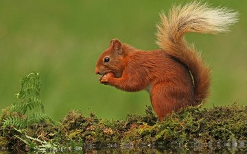 nature, background, moss, protein, tail