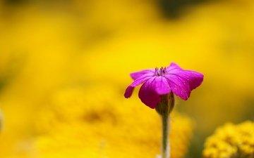 цветы, желтый, обои, фон, розовый, размытие, цветочек, м