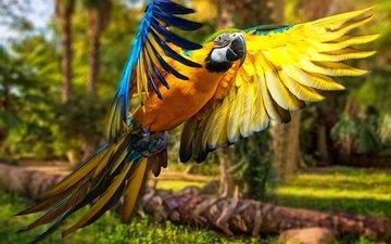 крылья, птица, попугай, птаха