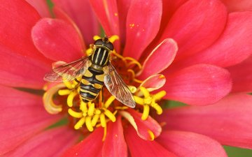 flower, bee, pollination