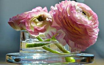 цветы, ваза, лютик, азиатский