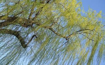 небо, природа, дерево, ветви