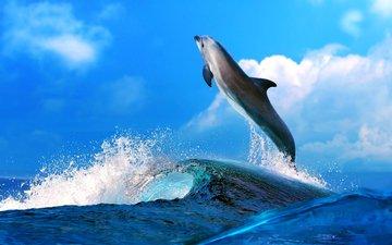 небо, вода, море, животные, океан, голубая, голубое, дельфин