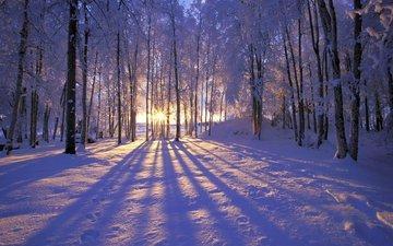 солнце, снег, лес, зима, иней, деревья. лучи