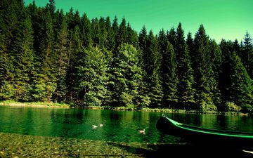 река, природа, лес, лодка, утки, берег реки