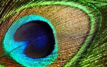 texture, macro, patterns, pen, peacock