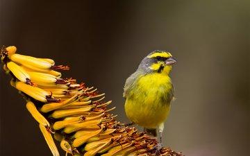 фокус камеры, фон, цветок, птица, жёлтая, тропический