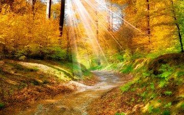деревья, природа, листья, пейзаж, дорожка, осень, солнечные лучи, желтые. лес