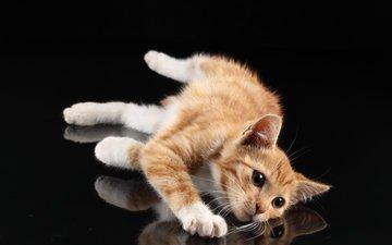 отражение, кот, мордочка, усы, черный, лежит, пол, рыжий, белые лапки