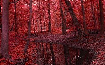 деревья, вода, река, природа, лес, листья, пейзаж, осень, красота, красное