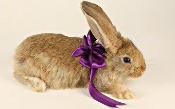 фиолетовый, ушки, кролик, подарок, лапки, бант, бантик