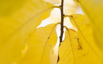 nature, leaves, autumn, yellow