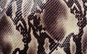 текстура, animal texture, раскраска, кожа змеи