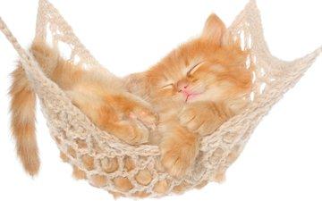 котенок, спит, животное, рыжий, котик