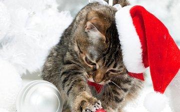 снег, кот, коты, шапка, котята, рождество, елочная