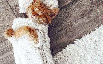 кошка, спит, коты, котята, дремлет