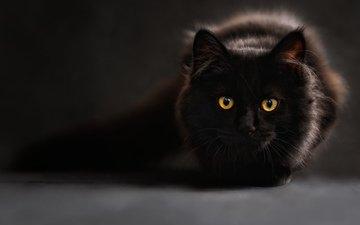 глаза, фон, кот, взгляд, черный, блака