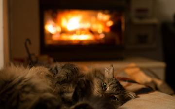 кот, шерсть, лежит, комната, животное, камин, тепло, зеленые глаза, лапки