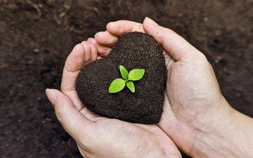 земля, жизнь, руки, росток, садоводство