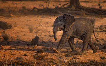 животные, слон, слоненок, животно е, слоники