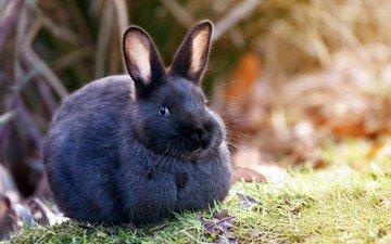 животные, кролик, зайцы, животно е