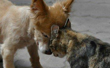 животные, кот, кошка, собака, cобака, животно е