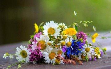 цветы, ромашки, букет, полевые