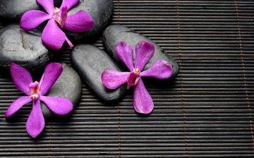 цветы, камни, бамбук, спа, дзен, блака, цветы, булыжники, дзэн, лиловая