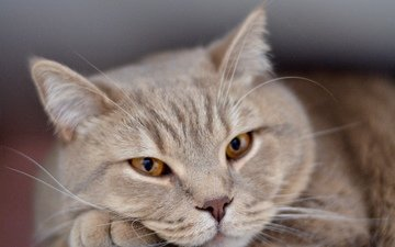 глаза, кот, грусть, одиночество, мордашка, животное, печаль, ожидание, грустит, взор, домашнее животное