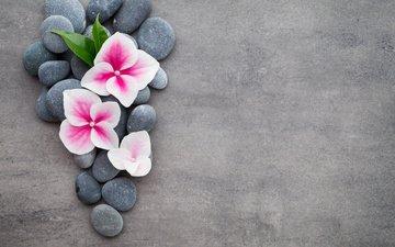 цветы, камни, спа, дзен, цветком, булыжники, дзэн