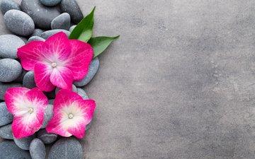 цветы, камни, спа, дзен, цветком, орхидею, булыжники
