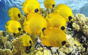 вода, море, океан, кораллы, рыба, риф, тропические рыбы