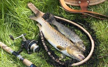 рыба, газон, fishing equipment, ловит рыбу