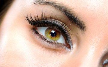 глаза, лицо, женщина, ресницы, брови, взор, eyelash, бурые