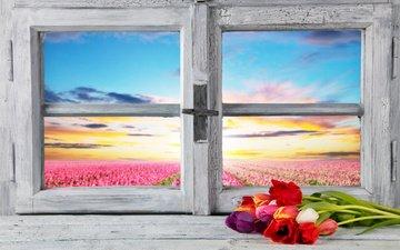 цветы, весна, тюльпаны, окно, тульпаны, цветы, весенние