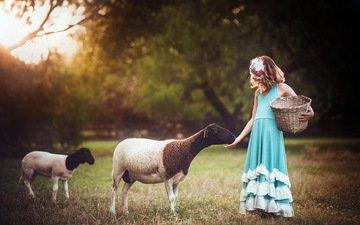 фон, девочка, овцы