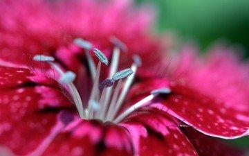 цветы, макро, розовые цветы