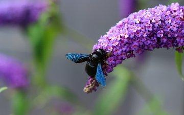 цветы, черная, муха