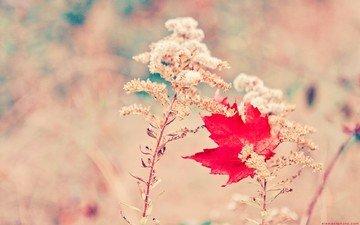 свет, трава, осень, блики, лист, растение, клен