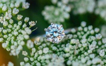 цветы, камень, кольцо, обручальное
