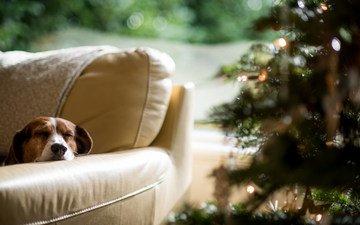 новый год, елка, собака, спит