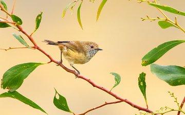 ветка, птица, перья, птичка
