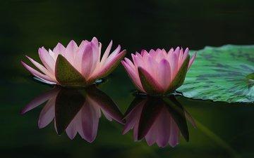 вода, отражение, пара, розовый, лилии, нимфеи