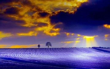 природа, дерево, тучи, лучи, поле, краски, зарево