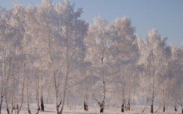 снег, зима, березы, иней